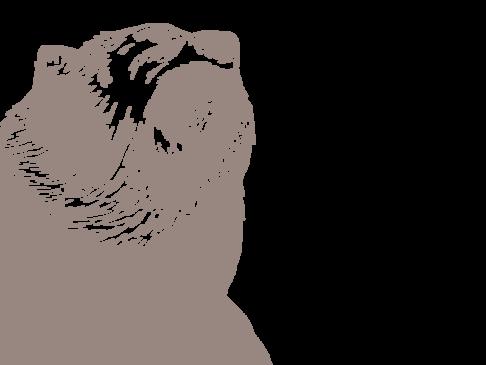 Die Bärensage